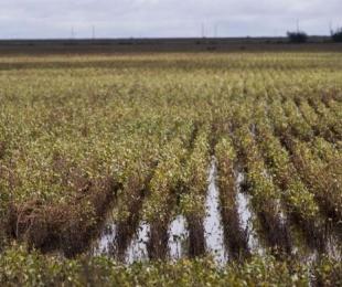 foto: Ya se perdió soja por al menos US$ 1.000 millones