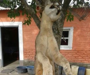 foto: Esquina: pobladores mataron a un Puma tras atemorizar a la zona
