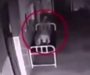 foto:  Terrorífico video: alma abandona cadáver en hospital