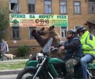 foto: VIDEO: Un oso en moto revoluciona las calles de Rusia