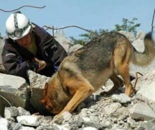 foto: Los cuatro olores que detecta un perro rescatista bajo escombros