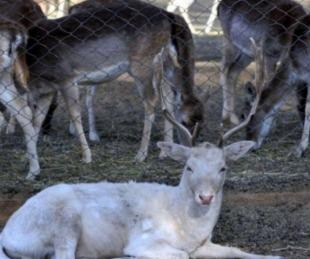 foto: El ex zoo abre la inscripción para adoptar animales