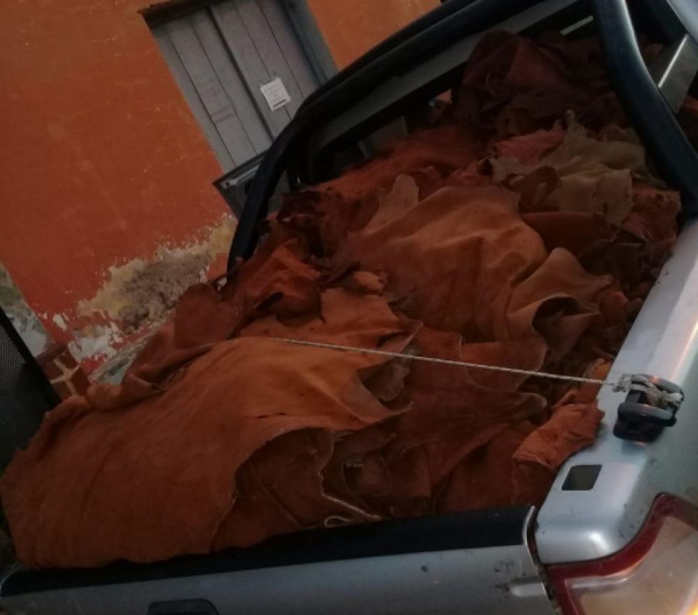 foto: La policía secuestró más de 1.273 cueros de carpinchos  en Mercedes