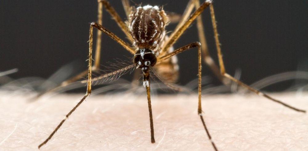 foto: Crecen en Misiones los casos de dengue por una cepa agresiva