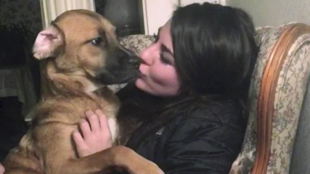 foto: Llevaron a la Suprema Corte la custodia de su perro tras la separación