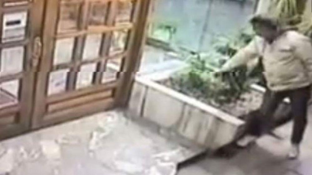 foto: Robó una palmerita y se escapó en un auto de lujo