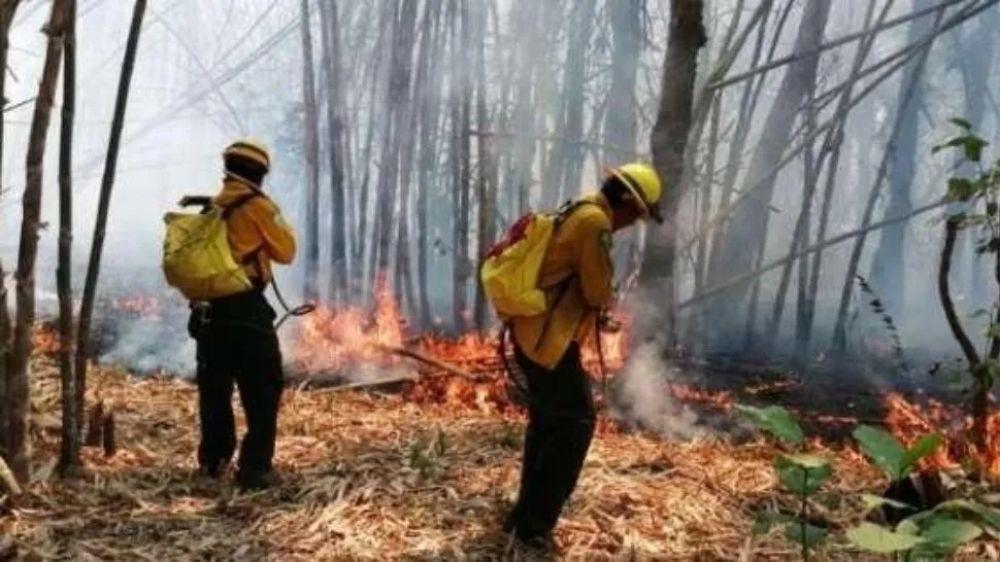 foto: Incendio devora reserva natural y declaran estado de desastre