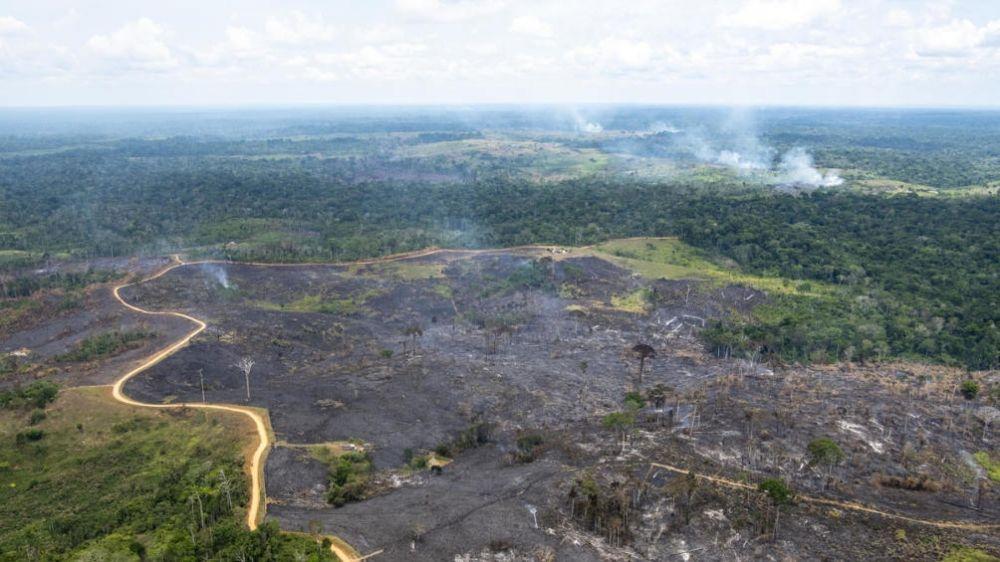 foto: Francisco calificó a la Amazonia como pulmón forestal vital