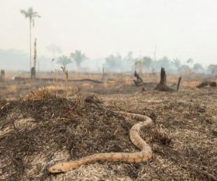 foto: Los habitantes del noroeste de Brasil afectados por el fuego