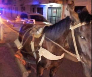 foto: Secuestraron un carro con caballos conducido por menor de 12 años