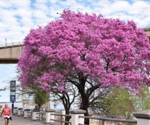 foto: Bievenida Primavera!: Cómo estará el tiempo en Corrientes?