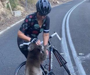 foto: koala se moría de sed y paró a una ciclista para que le diera agua