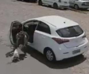 foto: Video de una mujer abandonando y maltratando a perro discapacitado