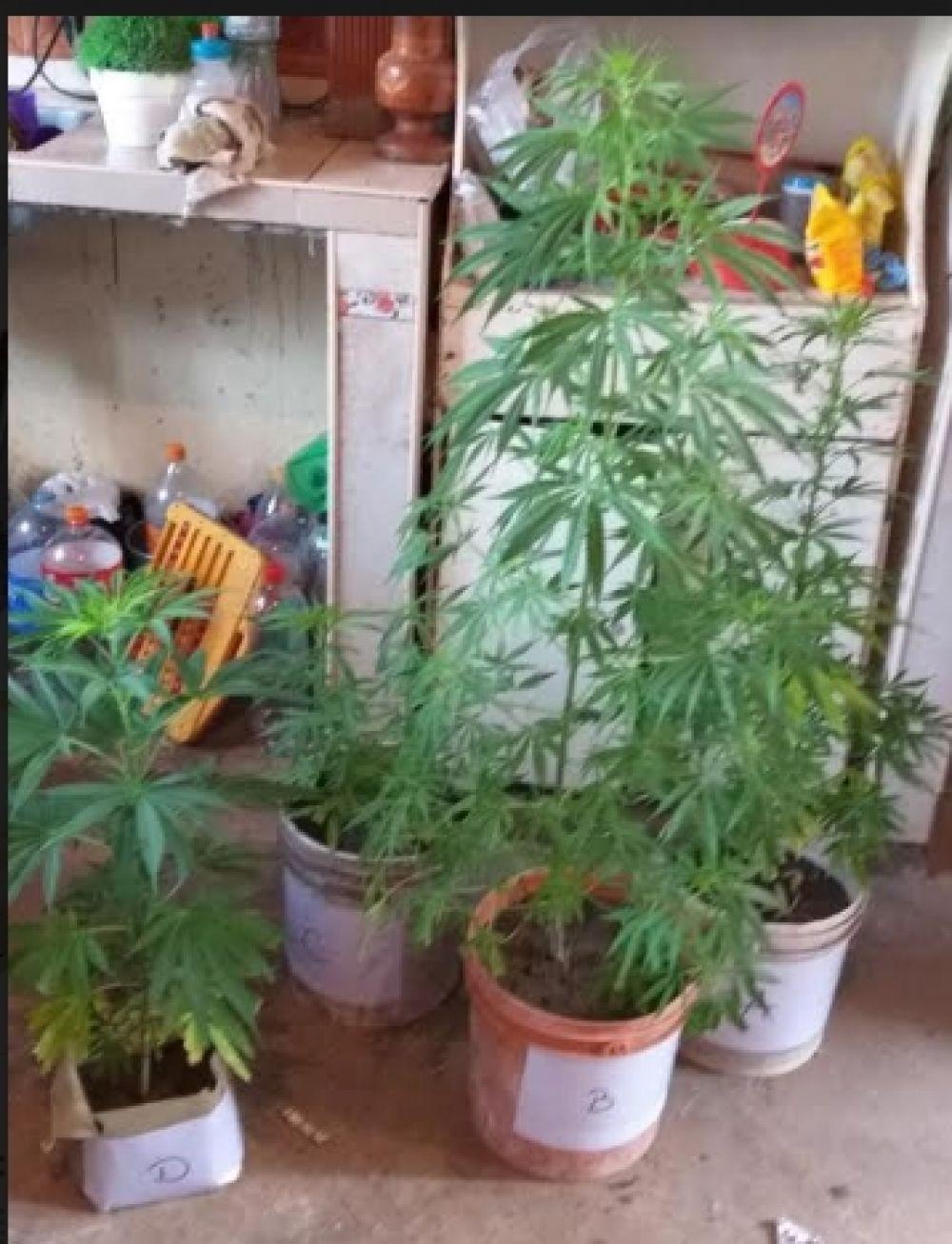 foto: Tras diversos allanamientos secuestraron drogas y elementos robados