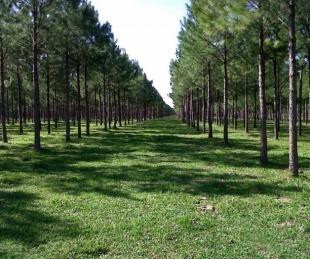 foto: Corrientes cerró 2019 con $ 224 millones en aportes no reintegrables para forestación