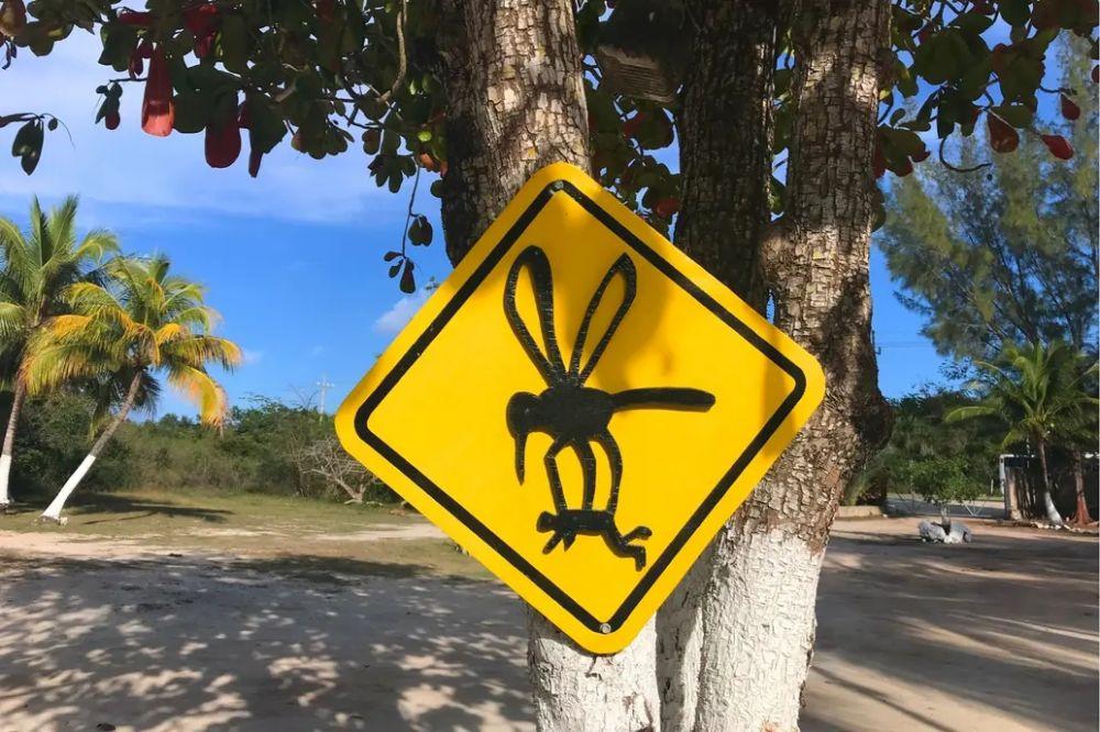 foto: Gigante: El extraño mosquito que apareció en Córdoba