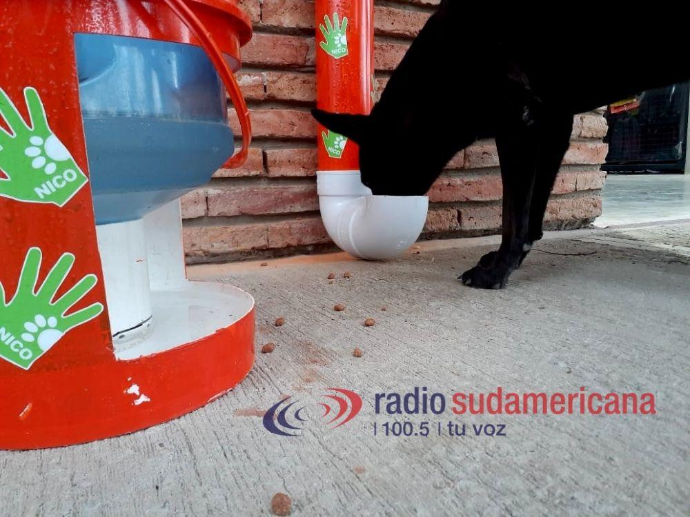 Ejemplo: instaló comederos y bebederos para perritos de la calle