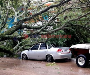 foto: Esquina: destrucción de vehículos y viviendas tras caída de árboles