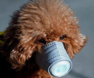 foto: Coronavirus: Perro dio positivo y lo pusieron en cuarentena