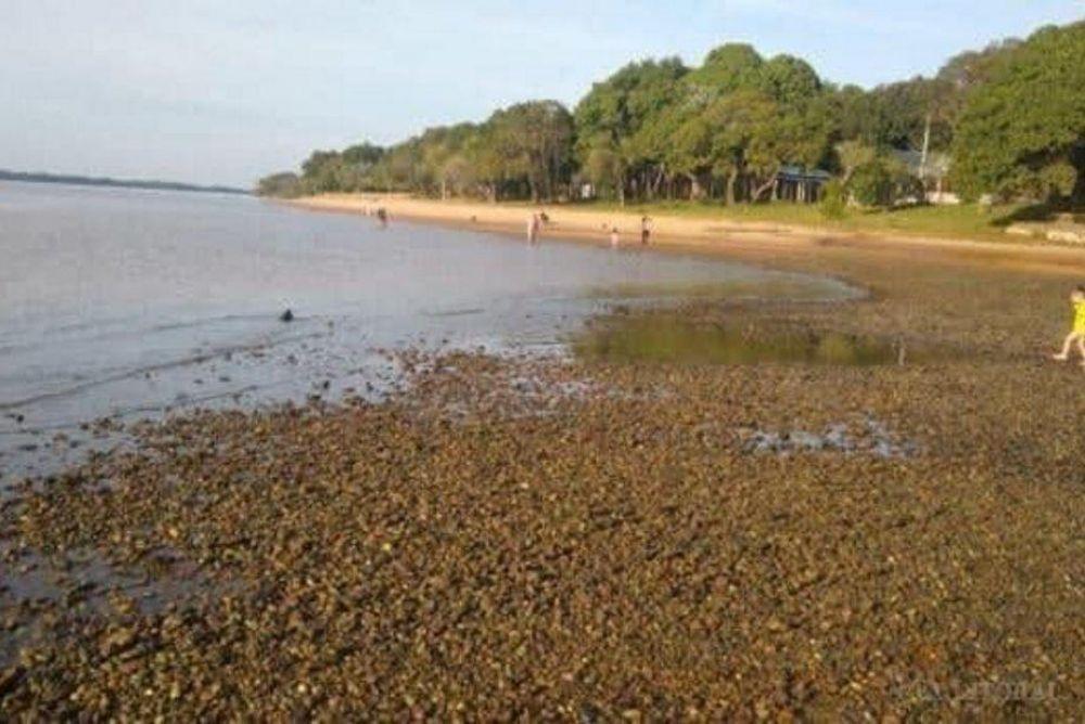 foto: Provincia asistirá a Isla Apipe que se encuentra aislada por la bajante del río