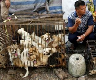 foto: Perros y gatos escapan de la lista de animales comestibles en China