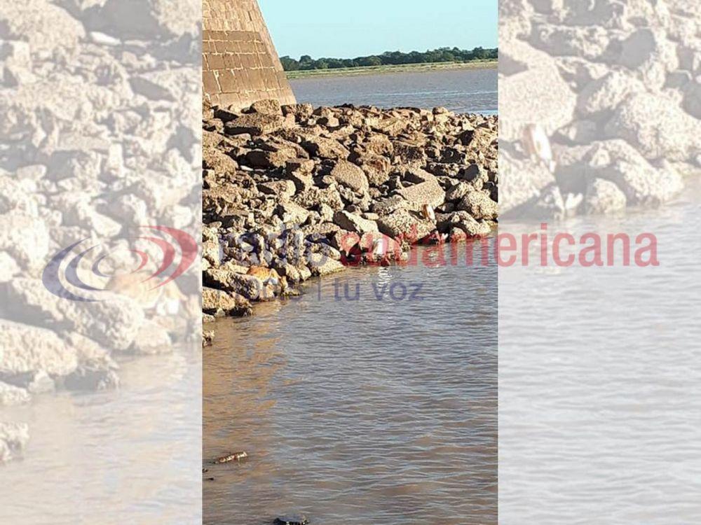 Peces hacen de las suyas en la costa ante ausencia de pescadores