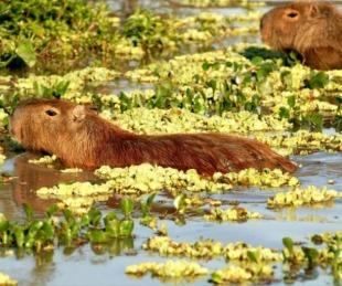 foto: Destacan al Iberá como uno de los mejores lugares para avistar fauna