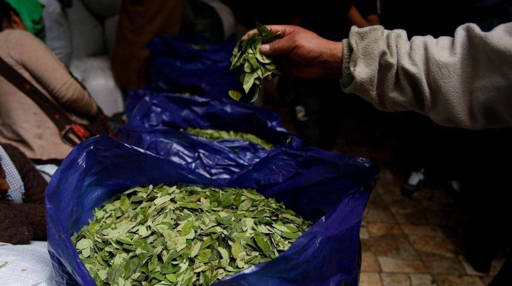 foto: Autorizan a Jujuy y Salta a distribuir 800 kilos de hojas de coca