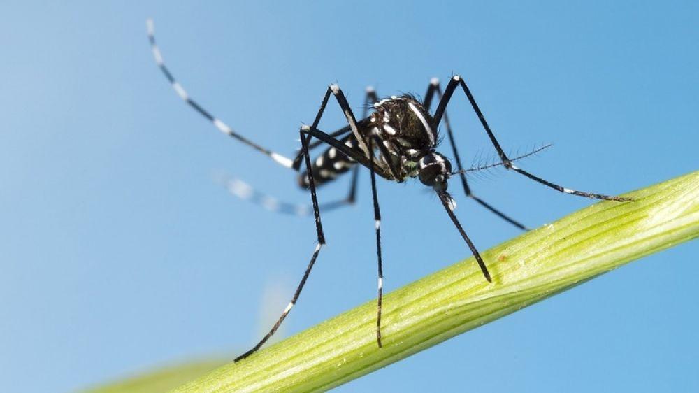 foto: Alertan por el mosquito tigre, capaz de transmitir 22 tipos de virus