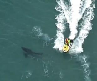 foto: Murió un surfista de 60 años tras ser atacado por un tiburón