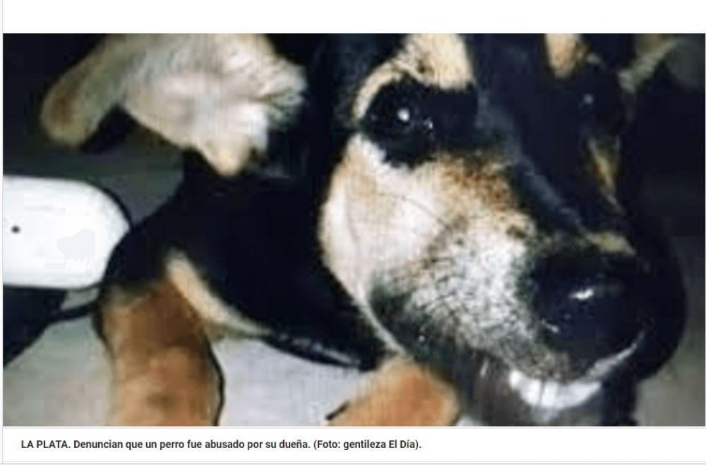 Un hombre denunció a su exmujer por abusar sexualmente del perro