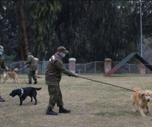 foto: Chile: comienzan a entrenar perros para detectar contagiados