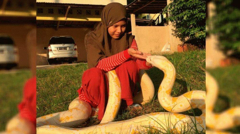 Una adolescente tiene seis pitones gigantes como mascotas