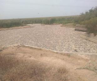 foto: Formosa: murieron millones de peces en el Bañado La Estrella