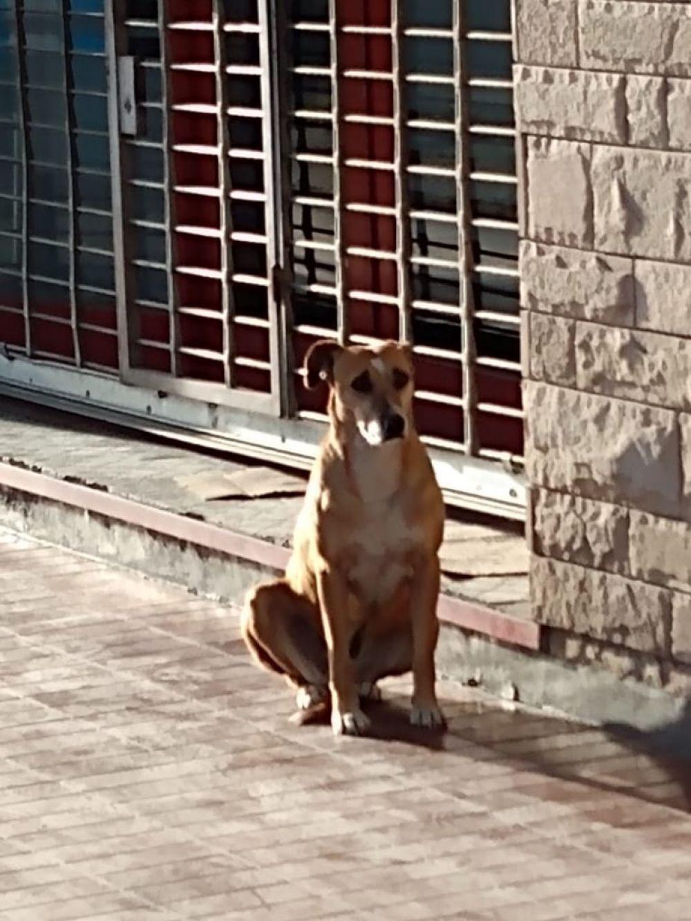 La tristeza de una perrita que espera a su dueña que falleció