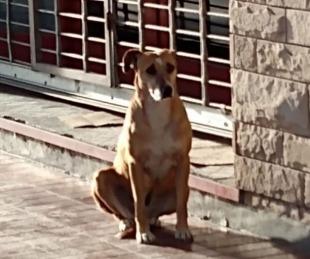 foto: La tristeza de una perrita que espera a su dueña que falleció