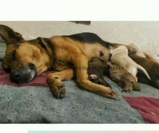 foto: Mirá cómo fue el emotivo rescate de una perrita y sus seis cachorros