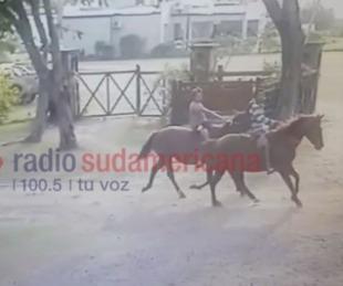 foto: Robaron tres yeguas preñadas de un campo y quedaron filmados