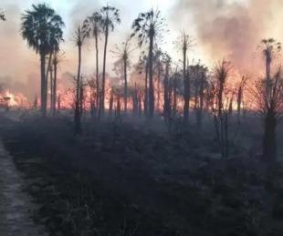 foto: Formosa: afirman que los incendios afectan en especial a la ganadería