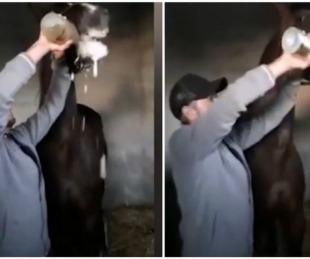 foto: Obligan a caballo de carrera a tomar una botella de champagne