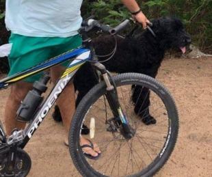 foto: Simularon ser verduleros, robaron un perro y fueron detenidos