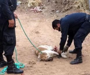 foto: Hallaron a un perro maniatado y amordazado en un baldío