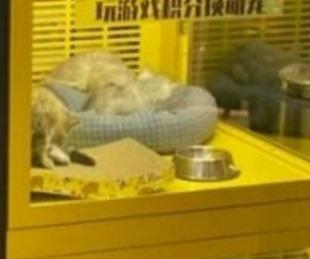 foto: Indignación por máquina que da como premio cachorros de perros y gatos