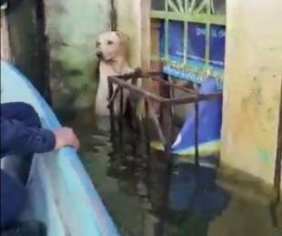 foto: Así rescató la Marina a un perrito de las inundaciones en Tabasco