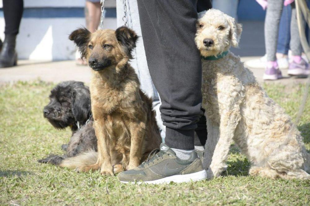 Reglamentaron ordenanza con horarios para pasear perros sin correa