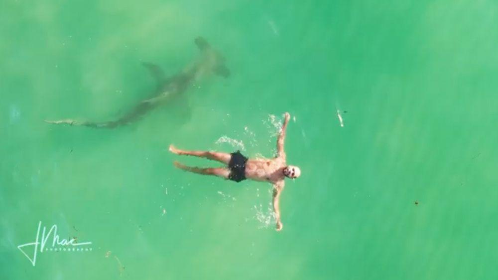 Un tiburón martillo de 3 metros rodea a un hombre que nadaba plácidamente