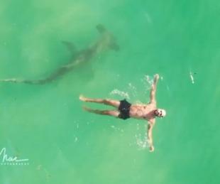 foto: Un tiburón martillo de 3 metros rodea a un hombre que nadaba plácidamente