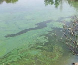 """foto: Alerta por bacterias que tiñen el agua: """"Tenemos que evitar meternos"""""""