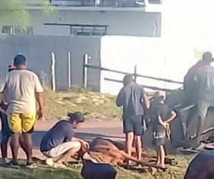foto: Indignación: caballo exhausto tiraba de un carro y murió en plena calle
