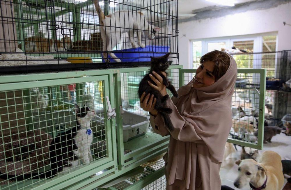 Son más fieles que los humanos: vive con 480 gatos y 12 perros